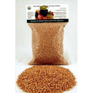 Organic Wheatgrass Seeds